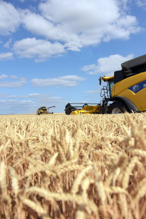 Hvede høst